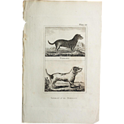1812 Comte de BUFFON'S Histoire Naturelle,   4 1/2 X 7 1/4 IN. Plate TURNSPIT DOG & VARIETY of the TURNSPIT #48,   Without Text Pages.