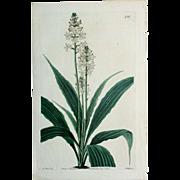 3 Original  Ridgeway Botanical Engravings #9