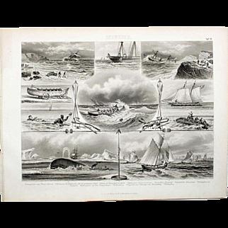 1860 Bilder Atlas Sea print #19 Sea scenes of Whaling, Fishing, Ships Floundering, Rescues.