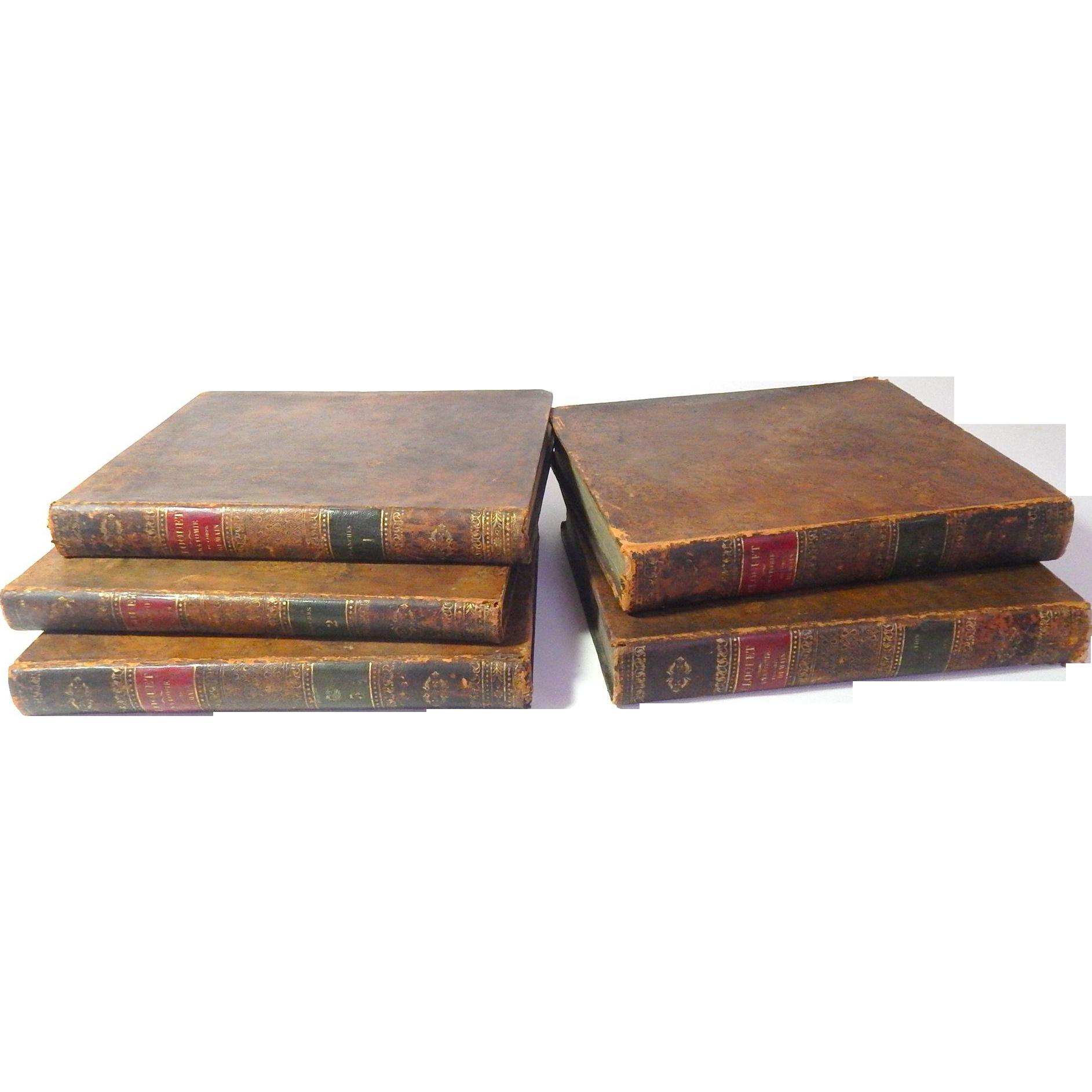 5 volume set 39 manuel d 39 anatomie descriptive du corps for Interieur du corps humain photo