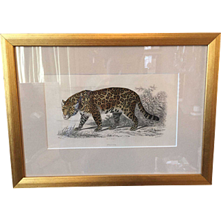 19th century Hand Colored Scientific Natural Engraving of a Jaguar , by Christophe Annedouche