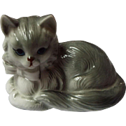 Adorable Porcelain Gray Kitten