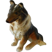 Miniature Porcelain Collie Dog