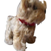 German Mohair Schnauzer with Red Leatherette Collar