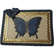 Tunbridge Straw BUTTERFLY Needle Case: Antique c1820's