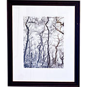 """Framed Photograph, """"Wiggles"""" by J. D. Marston"""