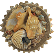 Round sea shell box
