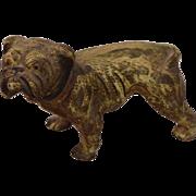 Antique Circa 1900 Cold Painted Vienna Bronze English Bulldog