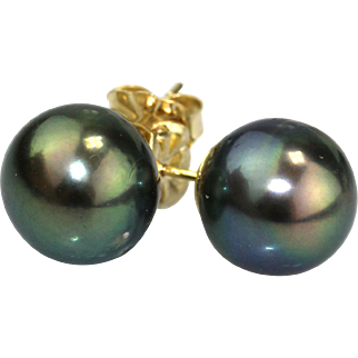 Peacock Cultured Tahitian Pearls Stud Earrings 14KT Gold