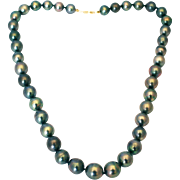 12mm Cultured Tahitian Pearls Necklace 14kt Gold