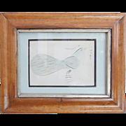 Antique 19th C. Signed Folk Art Spencerian Calligraphy Drawing of Bluebird