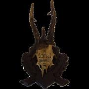 Vintage German Deer Abnormal Antler Black Forest Wood Base