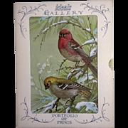 Vintage 1960's Ideals Gallery Litho-Prints Set of 4 Birds (Joan Beringer) Adorable Never Used