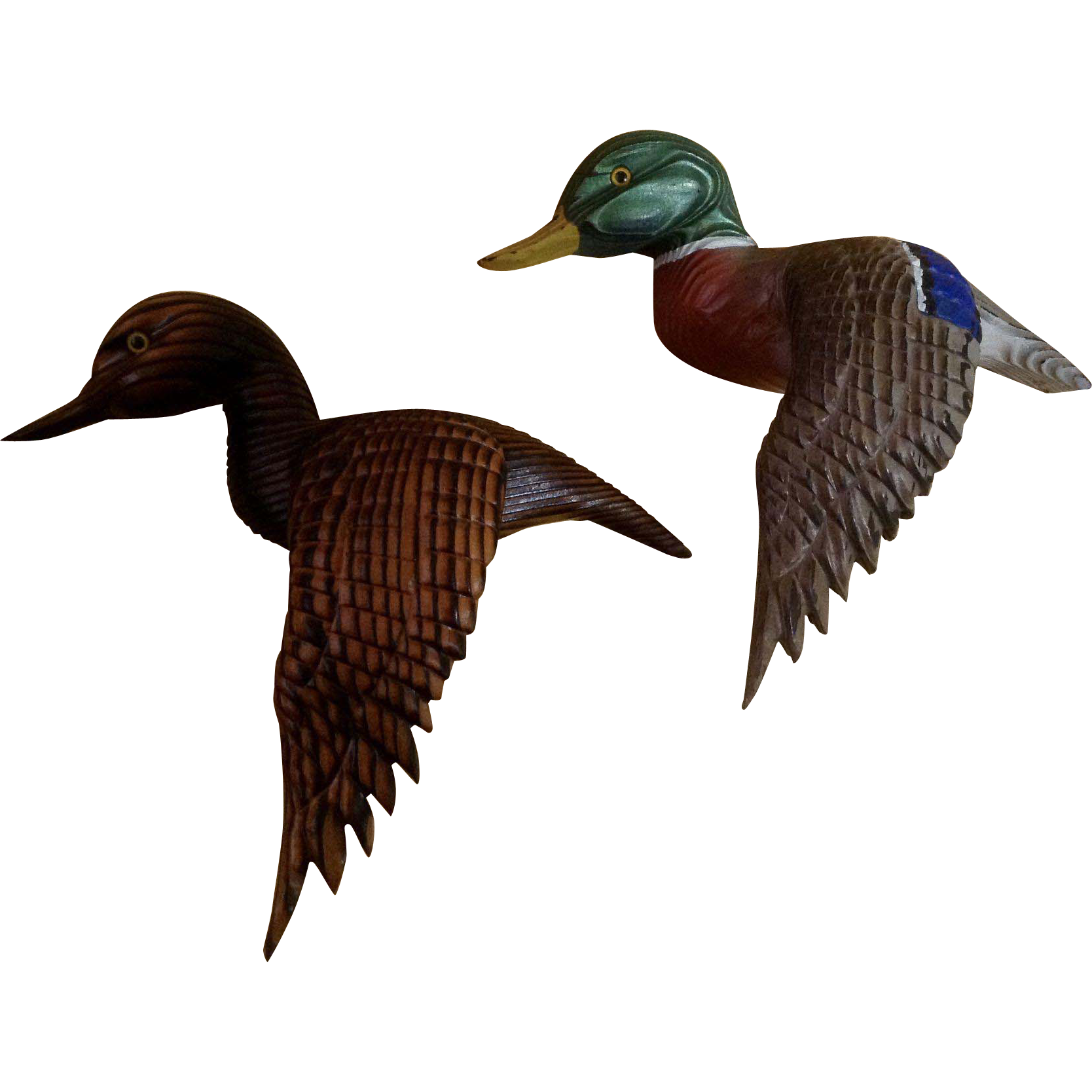 wood and mallard ducks Waterfowl: habitat: wood duck project: mallard project: the sporting chef: corporations and public agencies to install nest boxes and assist with the development of wetland habitat for wood ducks and other waterfowl.