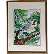 North American Blue Jay Sitting on a Pine Tree Branch Watercolor Painting Works on Paper