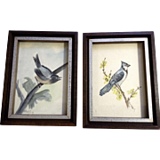 B Duffy, Aviary Watercolor Paintings Bluebird and Chickadee Birds Signed by Artist