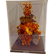 Vintage Real Bullseye Moth Mounted in Display Case With Dried and Silk Flowers