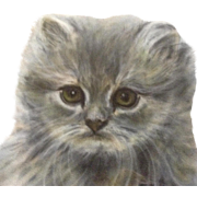 Fritzi W. Klopfenstein (1915-2013), Fluffy Kitten Blue Cream Persian Cat Pastel Drawing Signed by Artist