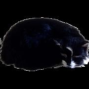 H.M.S. Amethyst Able Seaman Simon Hero Cat Model By Nauticalia Stuffed Plush Realistic Animal Black Cat