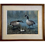 Bob Haynes, Canadian Geese on Nest, Realistic Oil Painting on Board, Signed by Listed Colorado Wildlife Artist