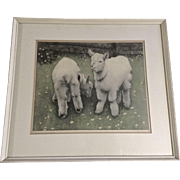 Vintage Colored Etching Figural Print of Baby White Goat Kids Signed by Artist