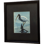 Donna Greenough, Baby American Ibis Water Bird Fishing Watercolor Painting Works on Paper Signed By Artist