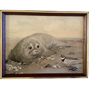 """Rita Parsons """"Orphan"""" Giclee on Canvas Framed of a Lonely Baby Seal Animal Picture"""