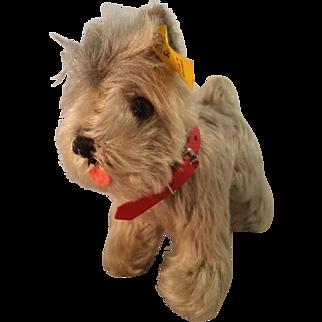 Steiff Tessie Terrier Schnauzer Mohair Dog with red collar c1970 #4320/14