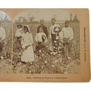 Black Americana Stereoscope Card by BW Kilburn 1892 #6951 Pickers Grouped in Cotton Field