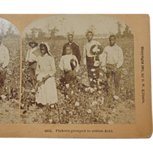 Black Americana Stereoscope Card by BW Kilburn 1892 #6951 Pickers Grouped in Cotton Field - Red Tag Sale Item