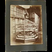 French taxidermy photo ca.1902, albumen .