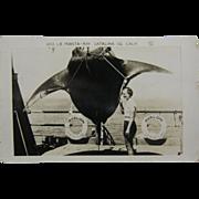 RPPC, ca.1905, giant Manta-Ray, Catalina Island, California.