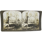 -SCARCE- 1903 antique stereoview by White, deer hunter's log camp scene #2