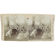 -SCARCE- 1900 antique stereoview, hunting, white pit bull, hollow log camping