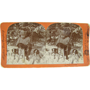 1895 Hunting dogs, pointers setters - antique stereoview by Lingley