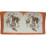 1899 MOOSE hunting, antique stereoview by Lingley