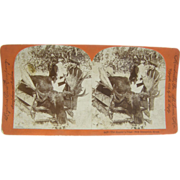 1899 MOOSE hunting, Canada, New Brunswick, antique stereoview by Lingley