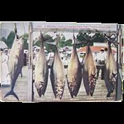 RPPC 1920's, Tuna Fishing, Catalina Island, California, color postcard