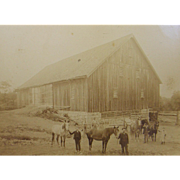 1895 barn horses, Mt. Pleasant Mills PA, American View Company, Rosenberger