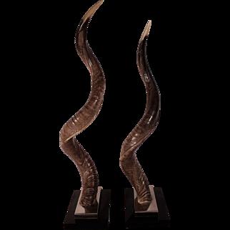 Rare Mid Century Antelope Horns by Ravarini Castoldi,  Retailed by Oggetti