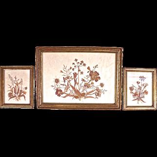 Lovely Set of Three Vintage Framed Dried Flower Arrangements