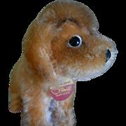****Steiff sweet puppy dog Revue Susi****