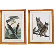 Large Pair of Audubon Bird Engravings