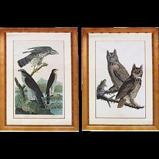 Large Pair of Audubon Bird Engravings