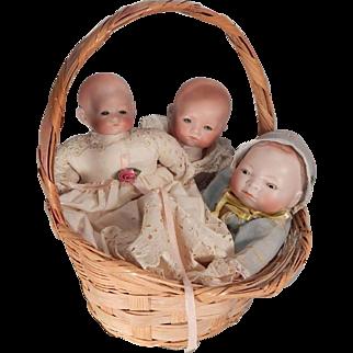 Cute little Basket of German Babies