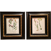 Lovely Pair of Vintage Floral Botanical Prints from the 1940s - 1950s, Gilt Wood Frames