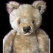 12'' Fully Jointed Mohair Steiff Bear Ca. 1950s