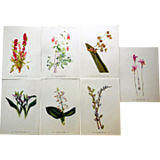 Series of 7 Vintage Botanical Prints, Early 20th Century