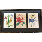 Antique Hand-Painted Etched Botanicals, Three in Frame