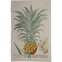 18th Century Floral Copper Engraving of Pineapple out of the Herbarium of ELIZABETH BLACKWELL HANDCOLORED